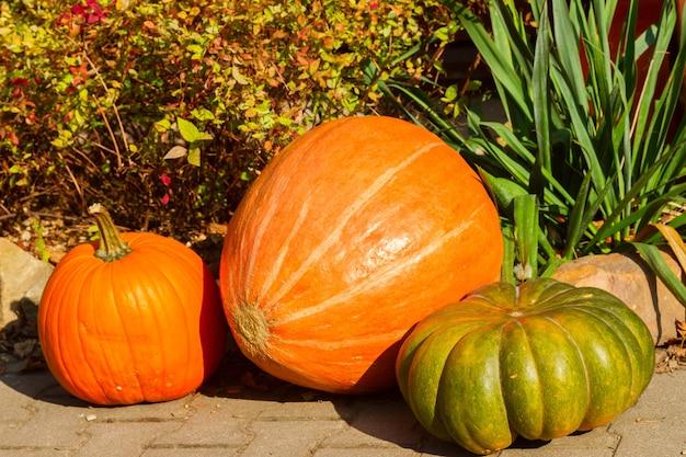 Drie oranje en groene pompoenen - herfstversieringen voor halloween