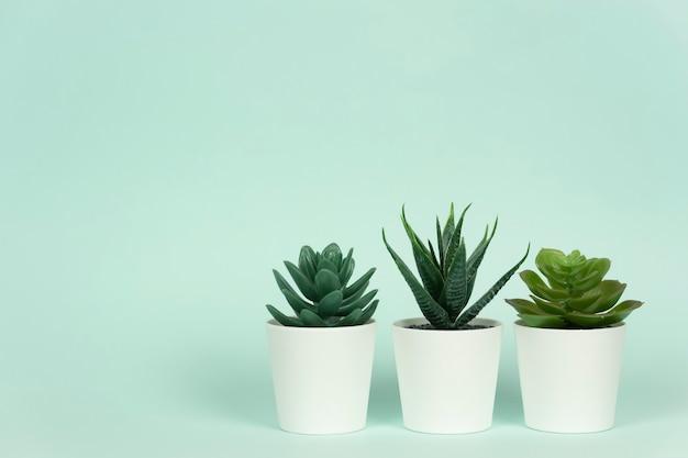 Drie potplanten vetplanten en aloë staan op een tafel