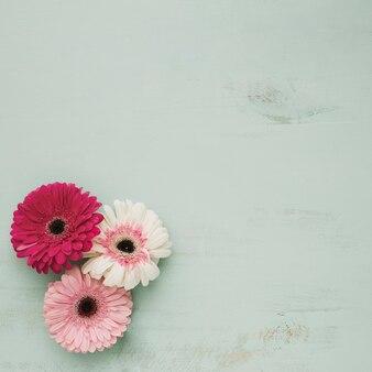 Drie prachtige bloemen