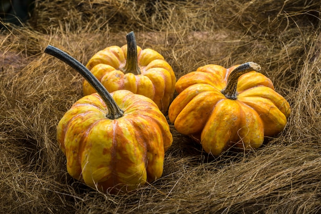 Drie pumpking op donkere bavkground, country western stijl