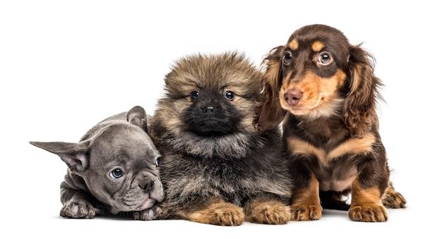 Drie puppy's naast elkaar, geïsoleerd op wit