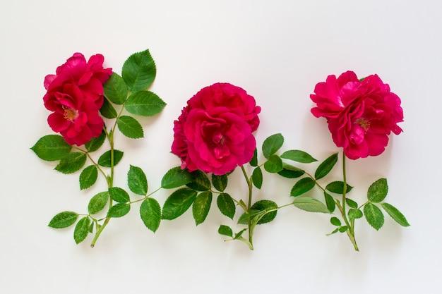 Drie rode rozen op witte achtergrond