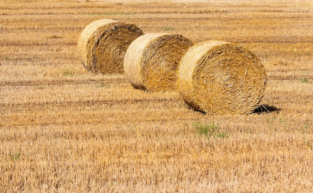 Drie rollen stro op elkaar gestapeld. landbouwgebied tijdens het oogsten van granen. zomertijd, close-up foto