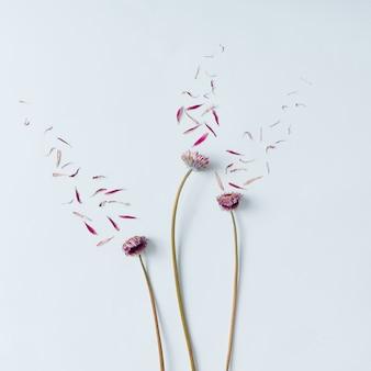 Drie roze bloemen met bloemblaadjes die op witte muur worden weggeblazen. plat leggen.