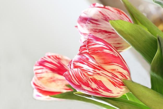 Drie roze bloemen op witte achtergrond