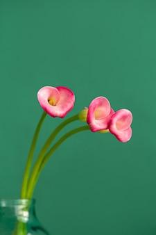 Drie roze calla bloemen in een glazen pot op een green.