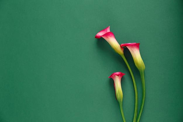 Drie roze callas op een groene tafel