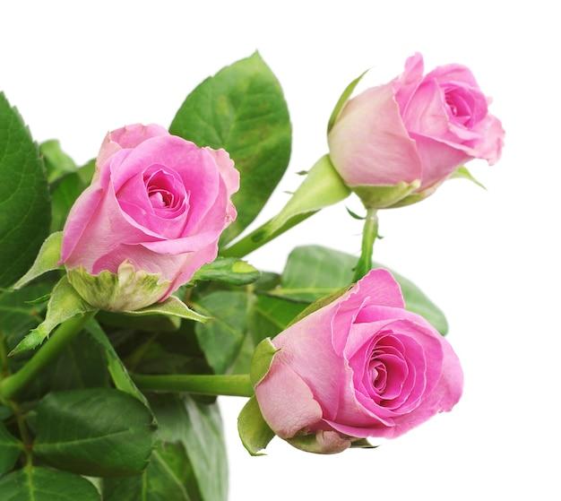 Drie roze roos close-up geïsoleerd op white