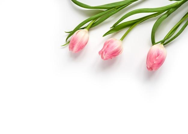 Drie roze tulpen in de rechter bovenhoek op een wit vlak