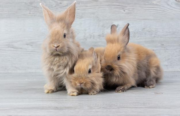 Drie schattige baby bruine konijnen