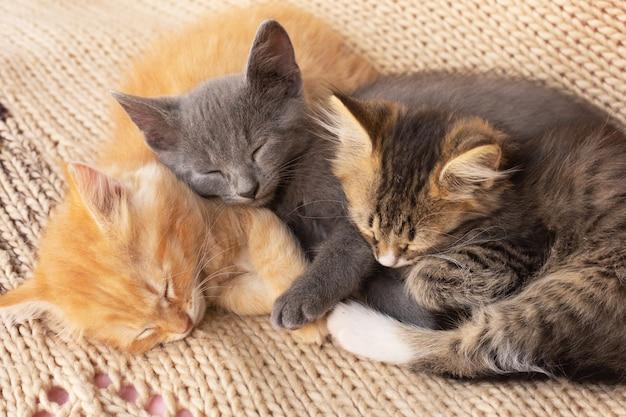 Drie schattige gestreepte katkatjes op gebreide deken. huisdier.