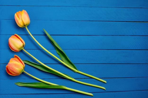 Drie tulpen op blauwe houten