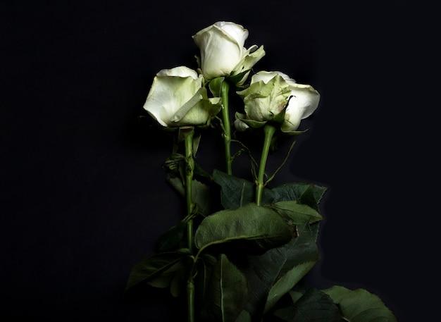 Drie witte roze bloemen op zwarte achtergrond.