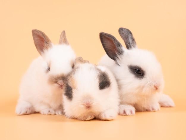 Drie witte schattig konijn op gele achtergrond. groep babykonijnen zitten geïsoleerd op achtergrond