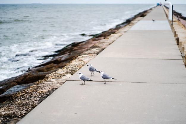Drie zeemeeuwen staan op de geplaveide loopbrug naast een strand