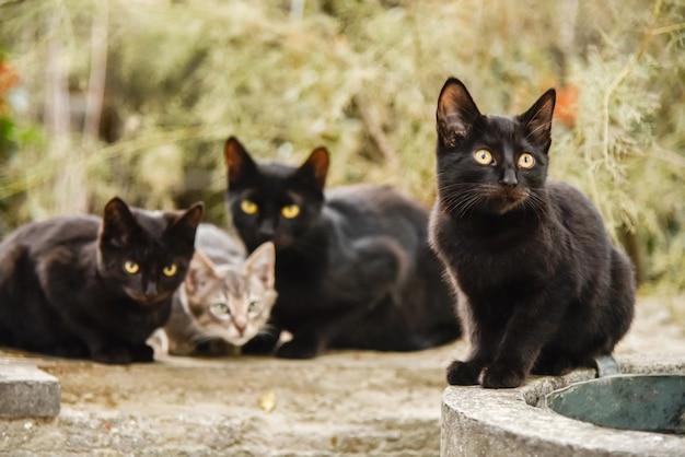Drie zwarte kittens en één grijze kittens spelen overdag buiten