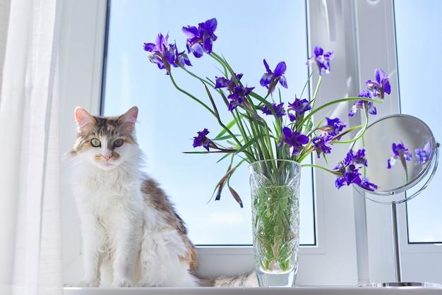 Driekleurige kattenzitting op een vensterbank met een vaas en boeketten van blauwpaarse irissen