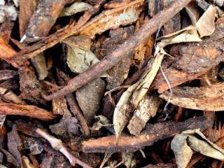 Drijfhout textuur, uitgehold