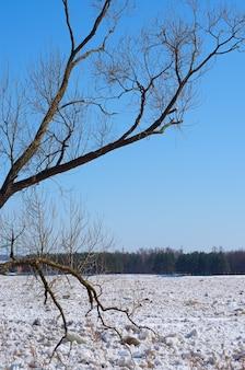 Drijvend ijs op de rivier in de lente