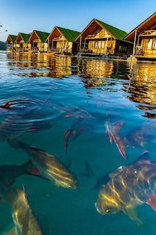 Drijvende bangalows wachten tot toeristen aankomen bij cheow lan dam of ratchaprapa dam in de provincie surat thani, thailand