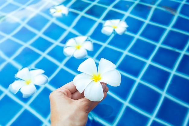 Drijvende frangipanibloemen in het zwembad