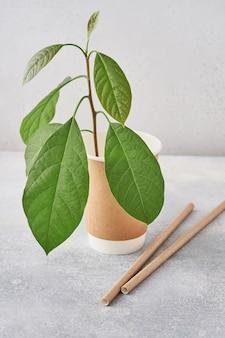 Drinkbuizen van papier en maizena, biologisch afbreekbaar materiaal en eco papieren glazen met groene spruit
