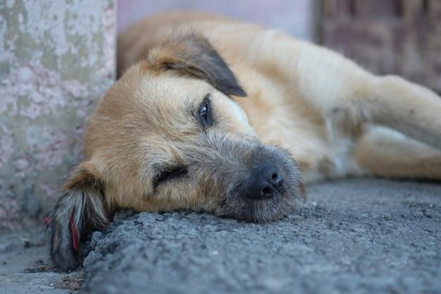 Droevige dakloze hond met een merkteken in zijn oor dat op de stoep ligt