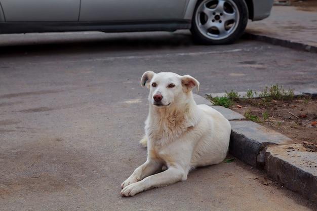 Droevige dakloze hond