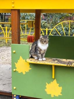 Droevige dakloze kat met groene ogen zit bij de bouw van speelplaatsen