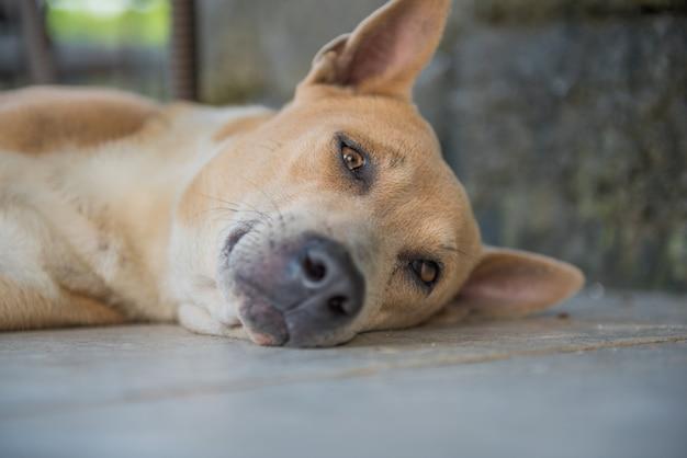 Droevige hond die op de vloer ligt.