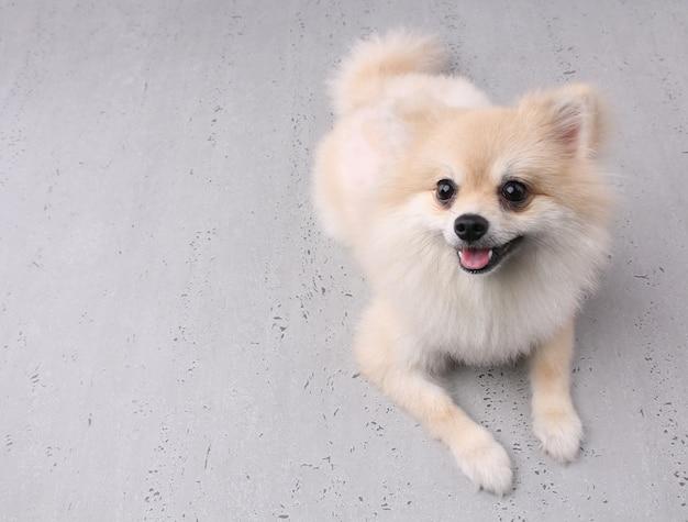 Droevige hond met witte achtergrond.