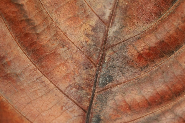 Droge blad textuur achtergrond