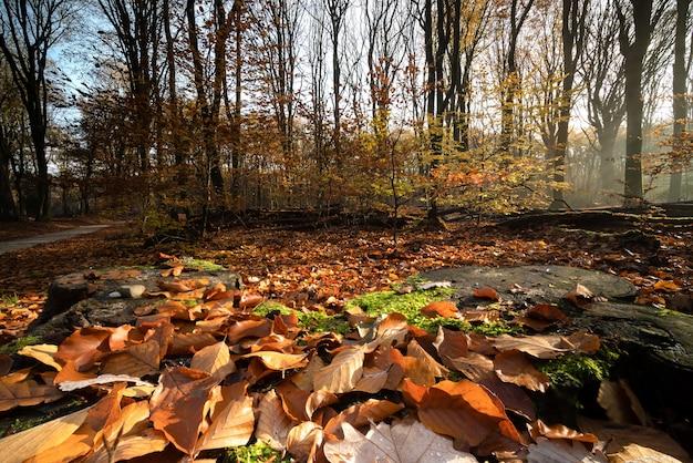 Droge bladeren die de grond bedekken, omringd door bomen in een bos in de herfst