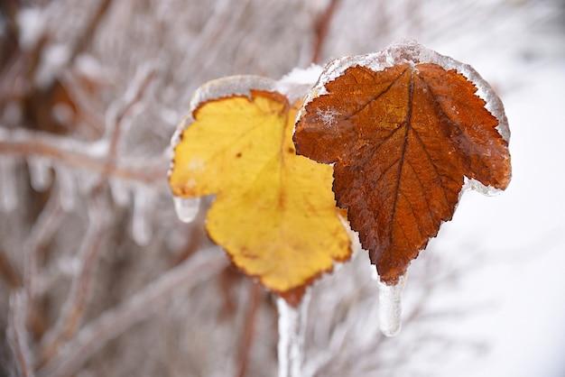 Droge bladeren die op een tak hangen die met ijs en ijspegels wordt bedekt