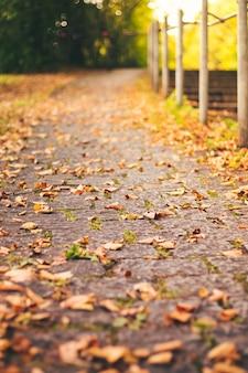Droge bladeren die tijdens een aangename herfst op de grond zijn gevallen