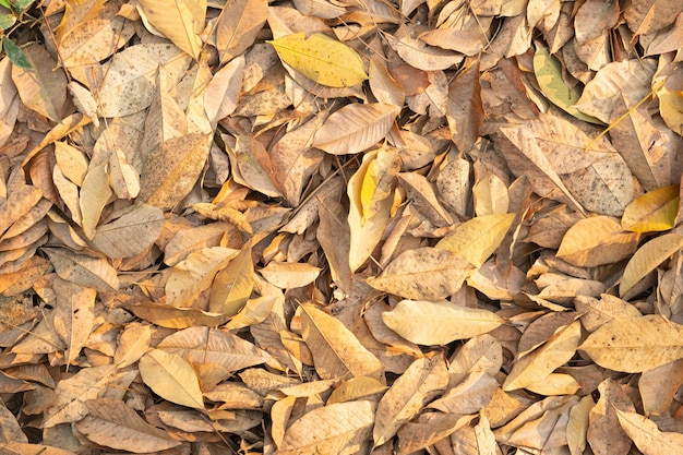 Droge bladeren die van bomen vallen.