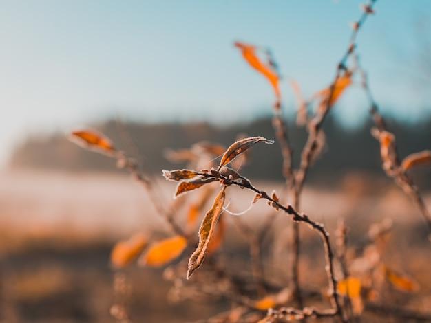 Droge bladeren groeien op een takje met onscherpe achtergrond