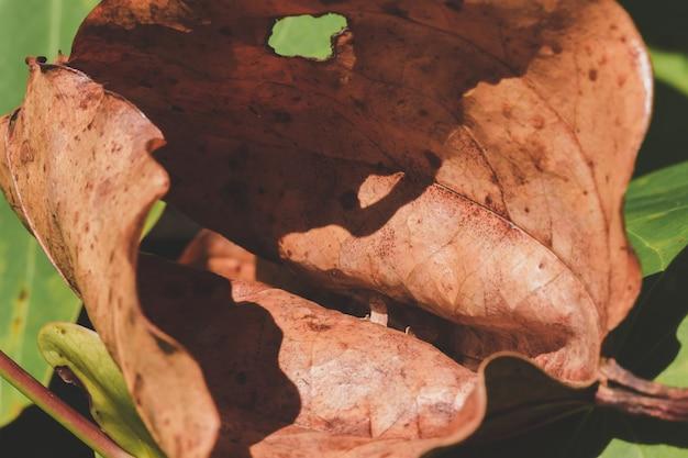 Droge bladeren krulden natuurlijk. viel op de grond