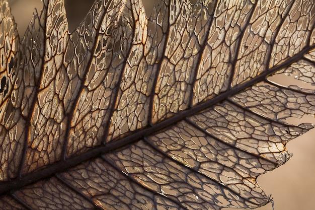 Droge bladtextuur in prachtige natuur. droge bladeren worden op natuurlijke wijze afgebroken.