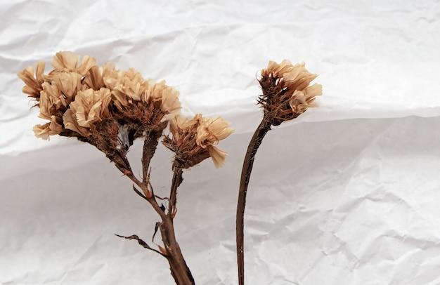 Droge bloem gezet op grungeoppervlakte