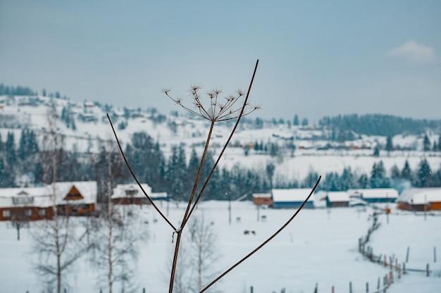 Droge bloem in het winterlandschap met sneeuw in de bergen met bossen in de mistige verre achtergrond