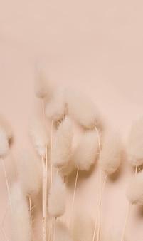 Droge bloemen op beige