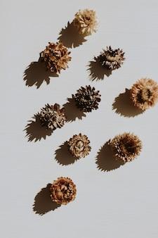Droge bloemknoppen op stoffig grijs
