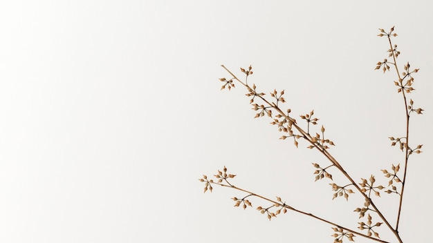 Droge bloemtak op een gebroken witte achtergrond