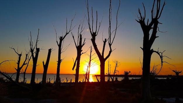 Droge bomen bij zonsondergang op het meer