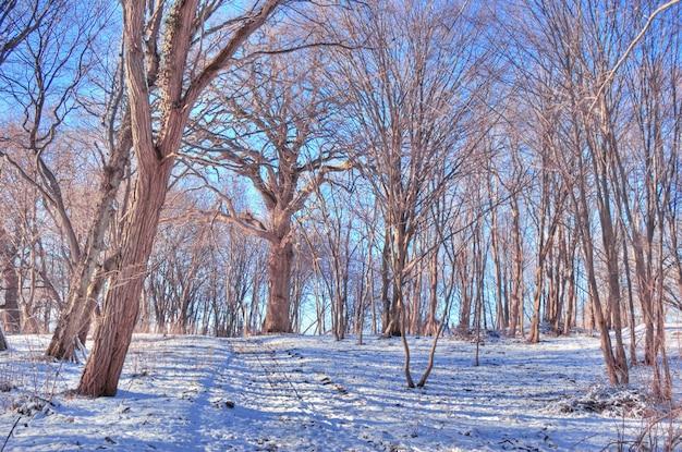 Droge bomen met sneeuw