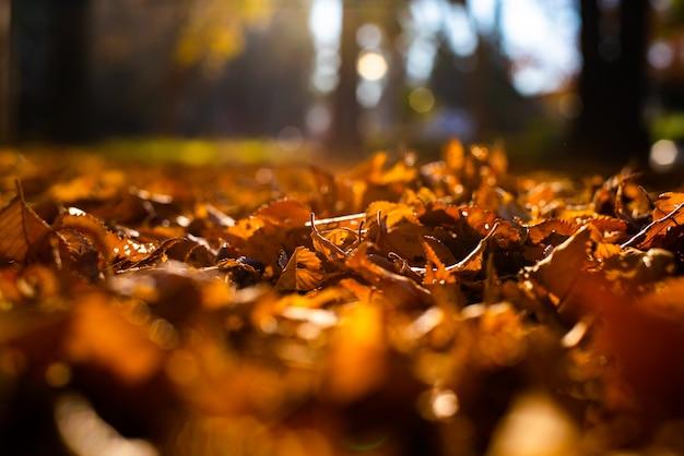 Droge boombladeren in oude aarde, de herfstconcept en warmte.