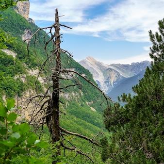 Droge boomstam midden in het bos met berg op de achtergrond en blauwe lucht in groen landschap.
