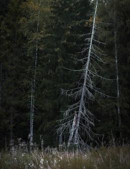 Droge boomstam op de achtergrond van een dicht bos