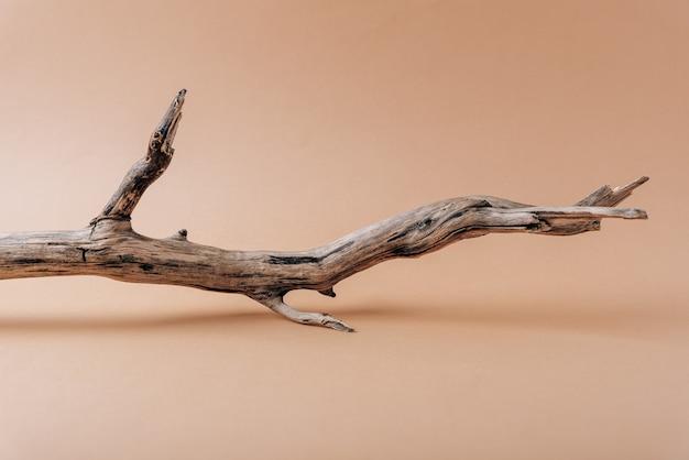 Droge boomtak op een beige close-up als achtergrond